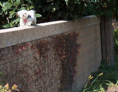 dog on wall HPIM0501_2