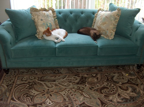 cats on teal couch