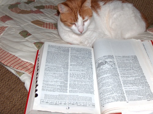 sandman reading dictionary HPIM8627